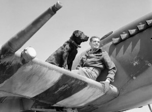 Johnnie Johnson on the the wing of his Spitfire Mk.IX with his Labrador retriever.